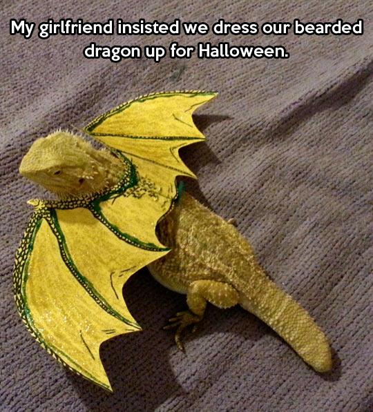 Bearded dragon is feeling pretty…