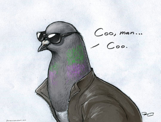 funny-bird-Coo-Coo-glasses-clothes