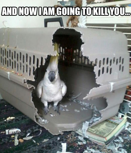 funny-bird-cage-eat-free