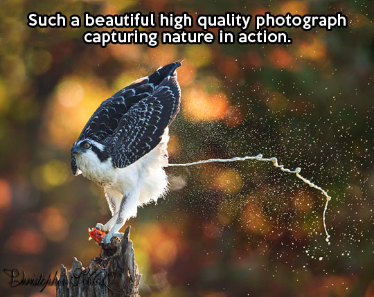 funny-bird-photo-action-nature