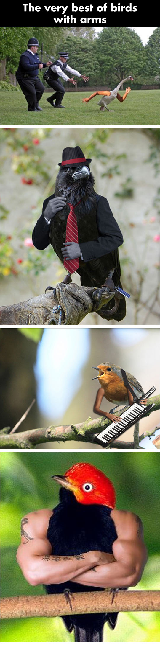 Birds with human arms...