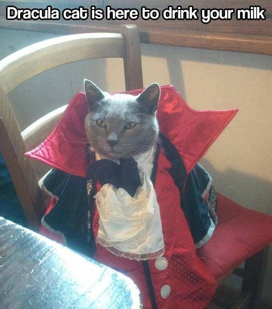Dracula cat…