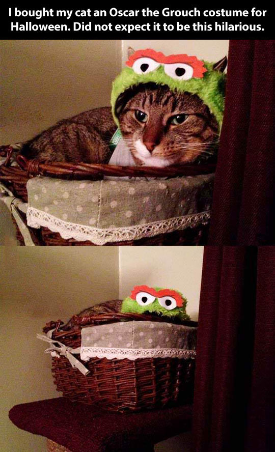 funny-cat-costume-Oscar-Grouch-bed
