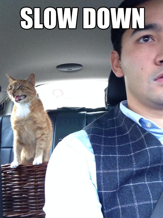 funny-cat-drive-shouting-car-slow-down