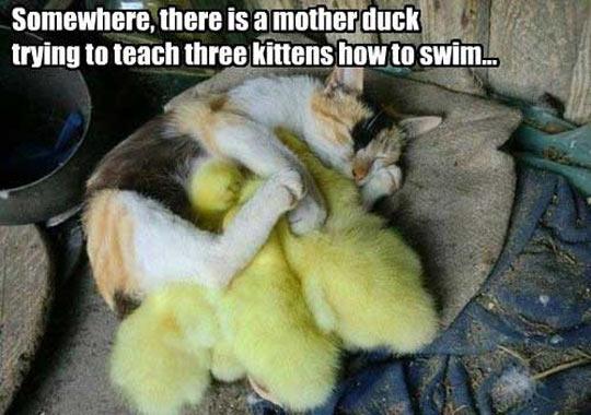 funny-cat-duck-babies-sleep-mother