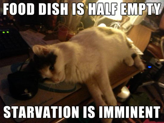 How every cat thinks…