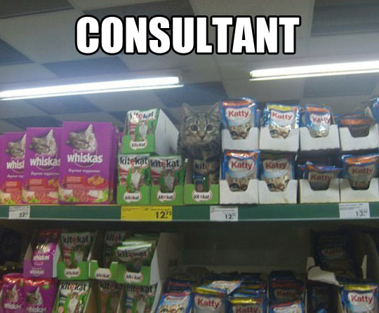funny-cat-food-store-consultant