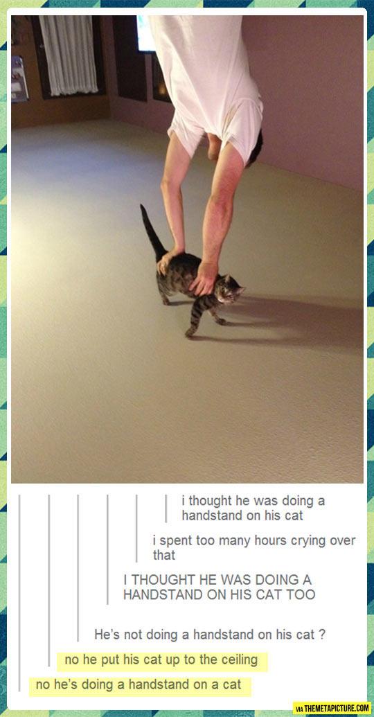 Cat handstand…