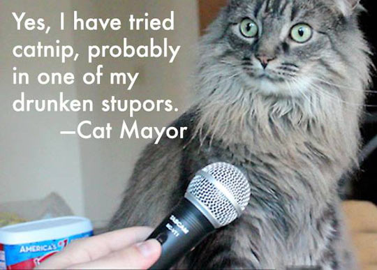 funny-cat-interview-microphone-catnip-stupors