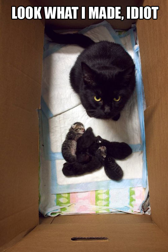 funny-cat-kittens-babies-box-stare