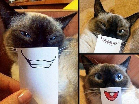 funny-cat-mouth-smile-paper
