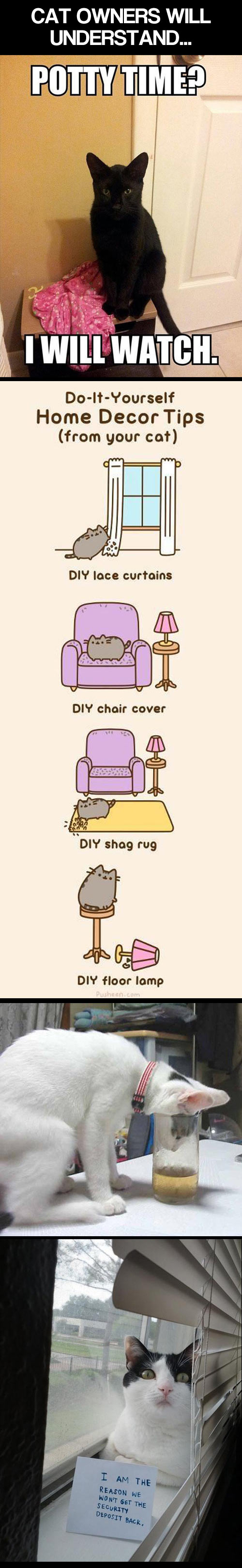 Cat owners will surely understand...