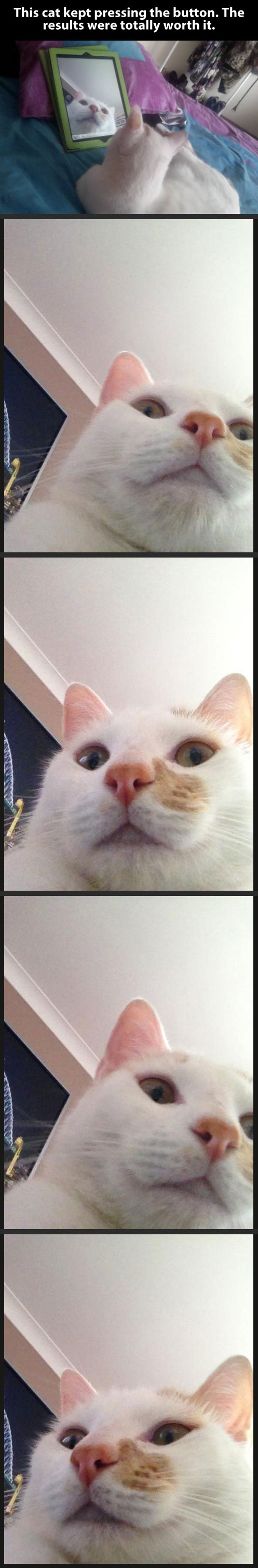 funny-cat-pictures-iPad-alone-faces