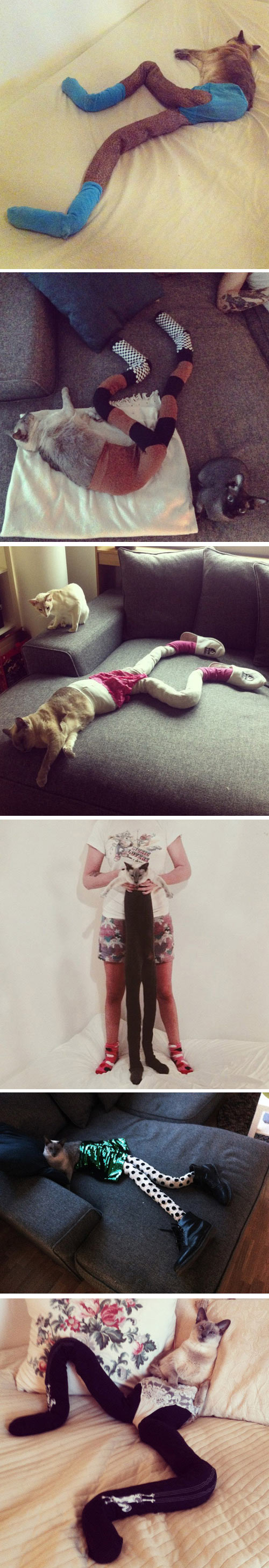 funny-cats-wearing-long-tights-shoes