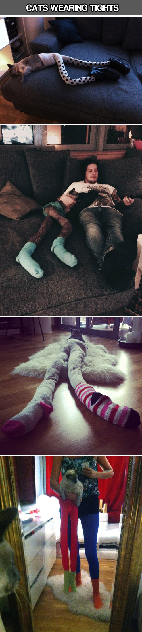 funny-cats-wearing-tights-shoes