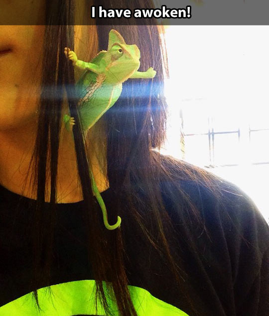 Behold the mighty chameleon…