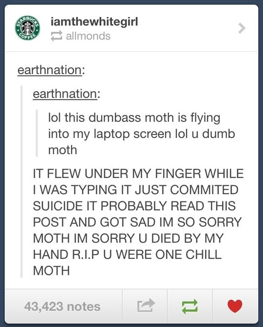 funny-comment-moth-laptop-screen