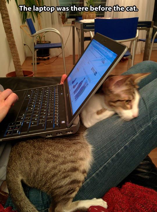 Cat vs. laptop…