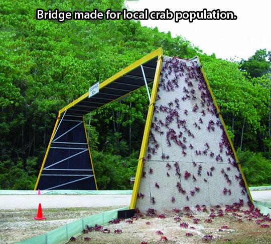 funny-crab-bridge-street-woods