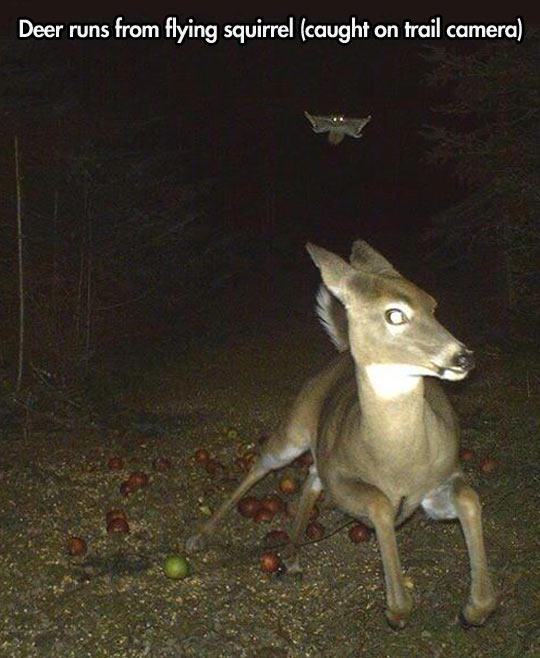 funny-deer-running-flying-squirrel