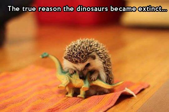 funny-dinosaurs-hedgehog-pet-attack-bite