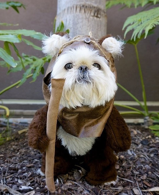 funny-dog-Ewok-costume-Star-Wars