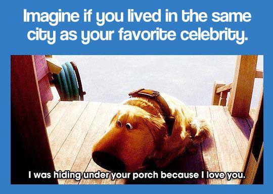 funny-dog-Up-porch-hiding-celebrity