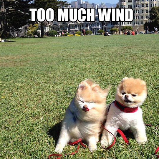 Windy day…