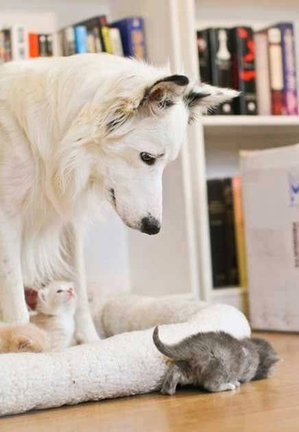 Babysitter dog…