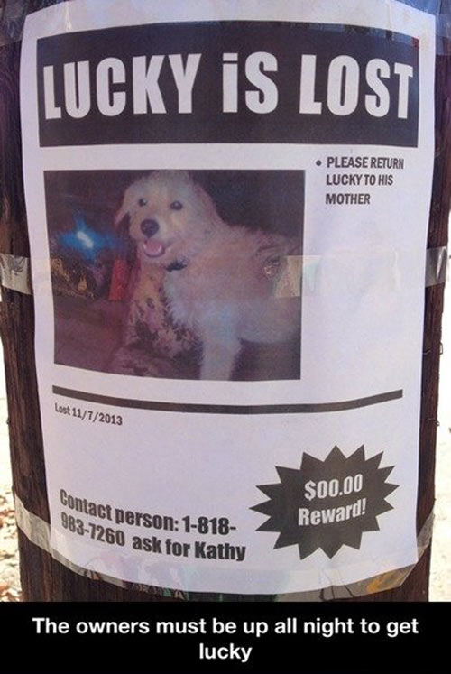 funny-dog-lost-sign-lucky