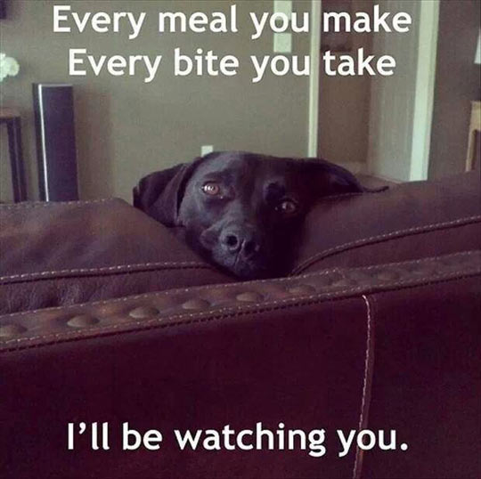 funny-dog-meal-bite-Every-Breath-Take-song
