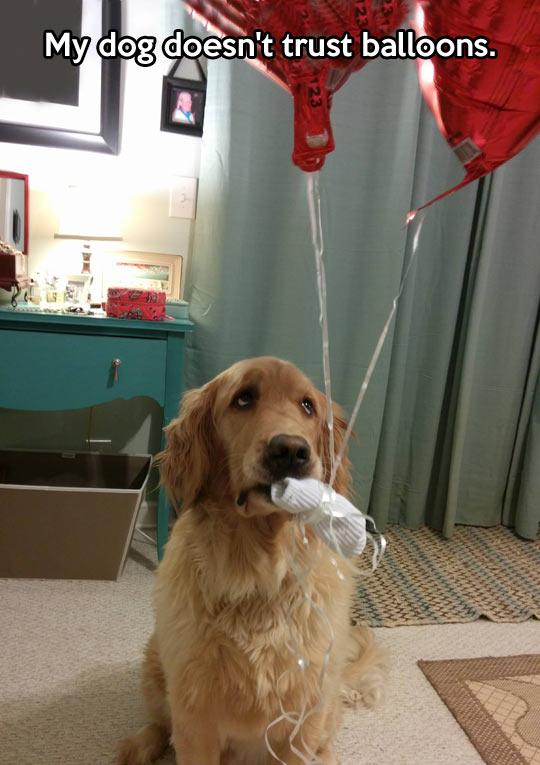 funny-dog-sad-balloons-mouth
