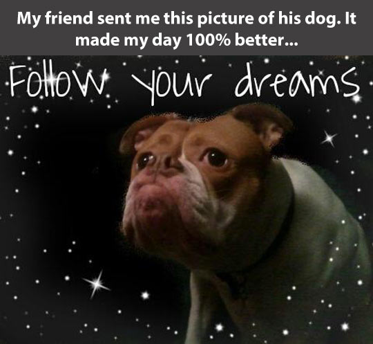 funny-dog-stars-space-inspirational