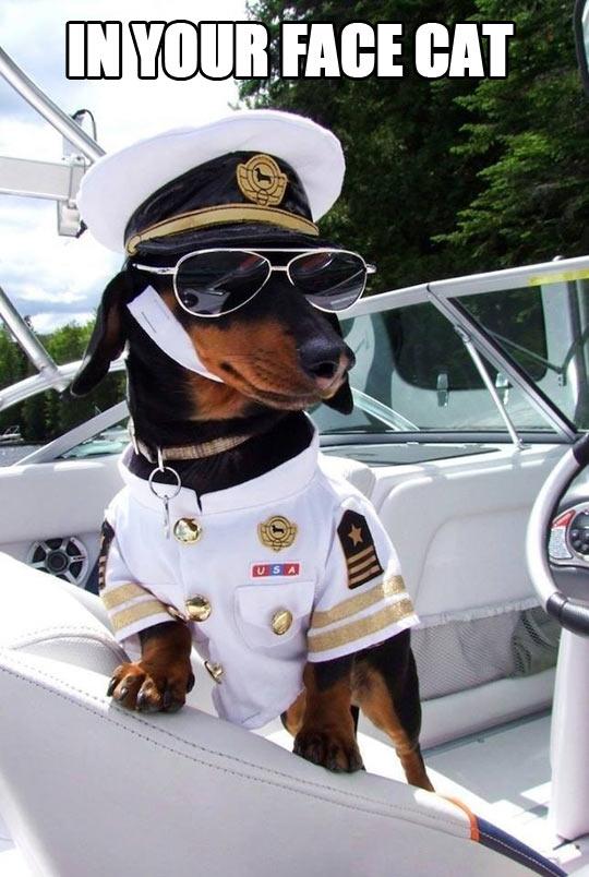 funny-dog-uniform-boat-captain-glasees