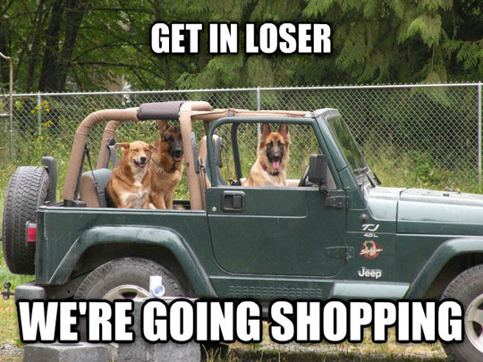funny-dogs-Jeep-trip-shopping