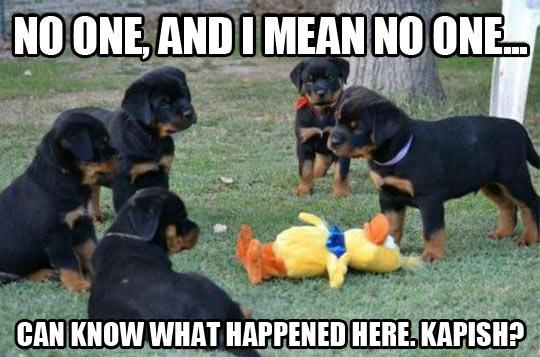 Puppies mafia…