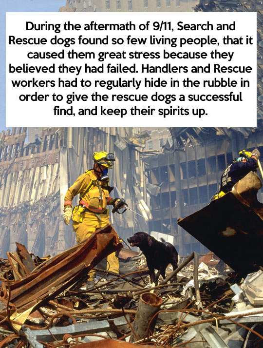More proof that dogs are awesome…