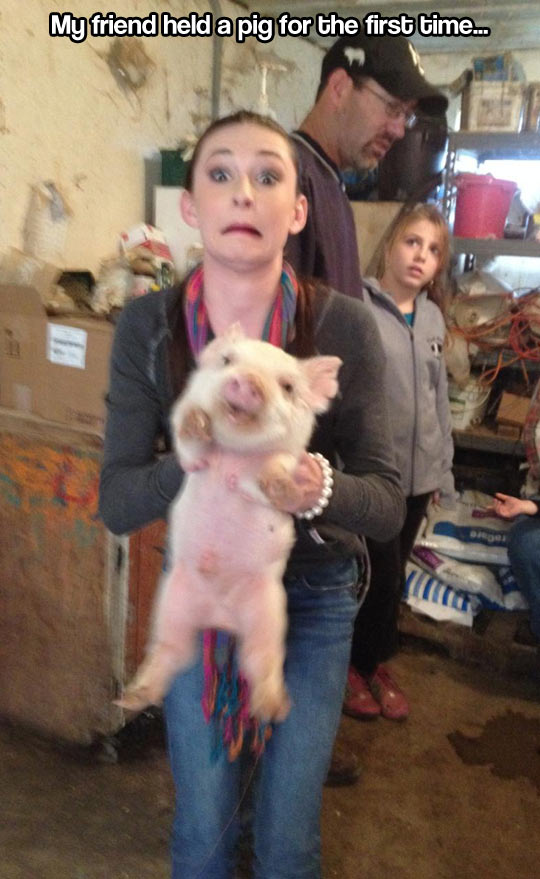 funny-face-girl-holding-pig
