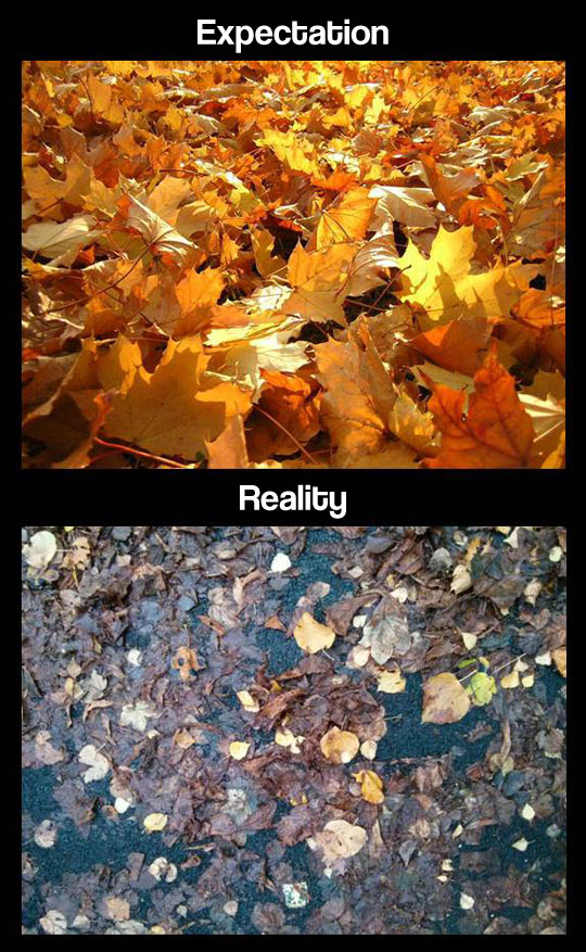 Fall is disappointing…