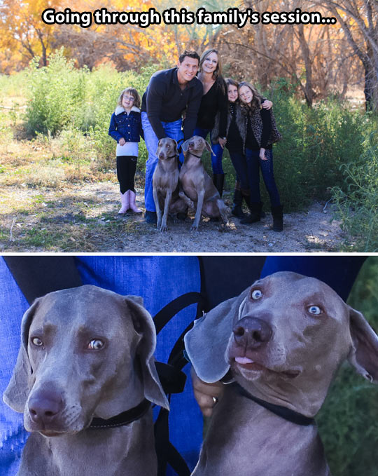 funny-family-pictures-dogs-face