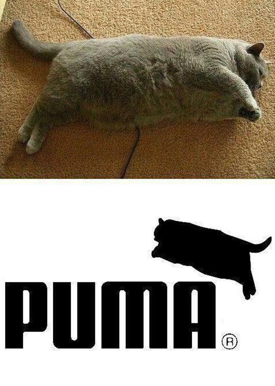 Puma's new logo…