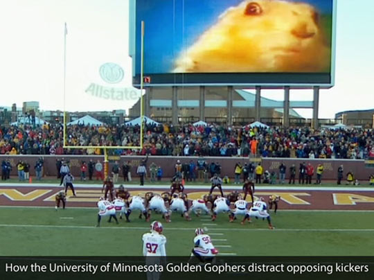 funny-football-game-distract-squirrel-screen