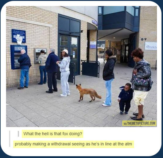 Just a fox at the ATM…