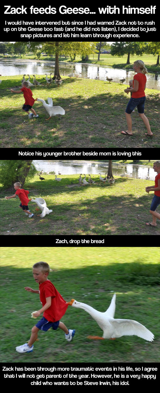 funny-geese-mom-son-running-park