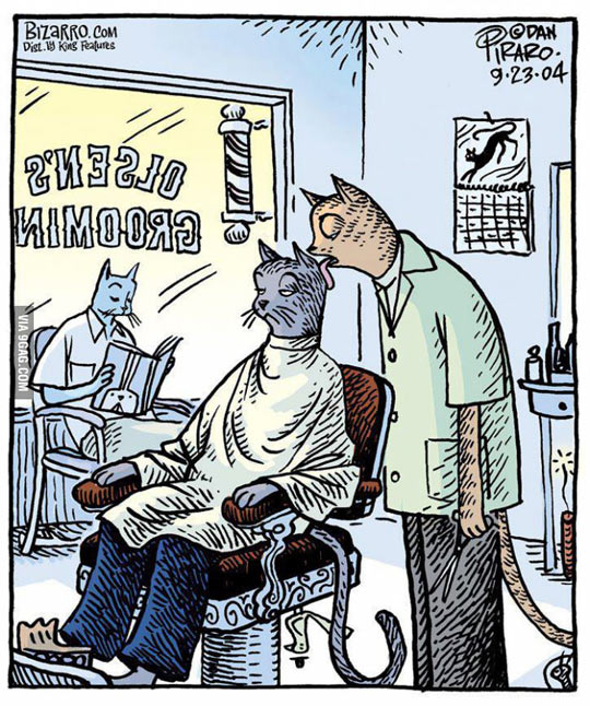 Funny Memes For Hairstylists : Barber cat…