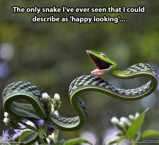 Happy looking snake…