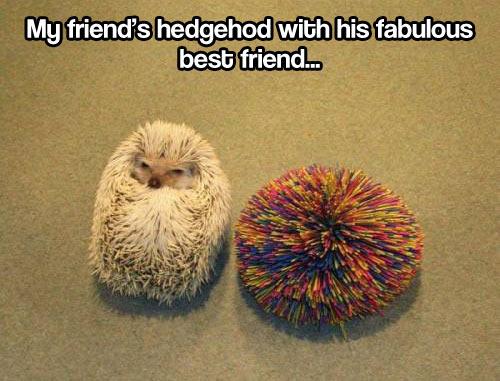 Hedgehog's best friend…