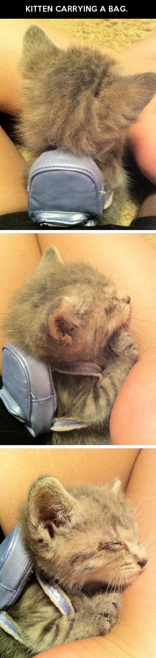 Just a kitten carrying a bag…