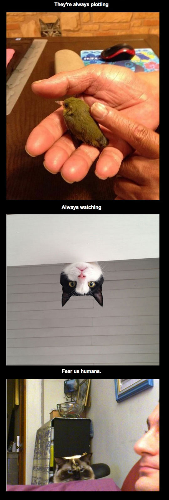 funny-leaders-cats-bird-watching
