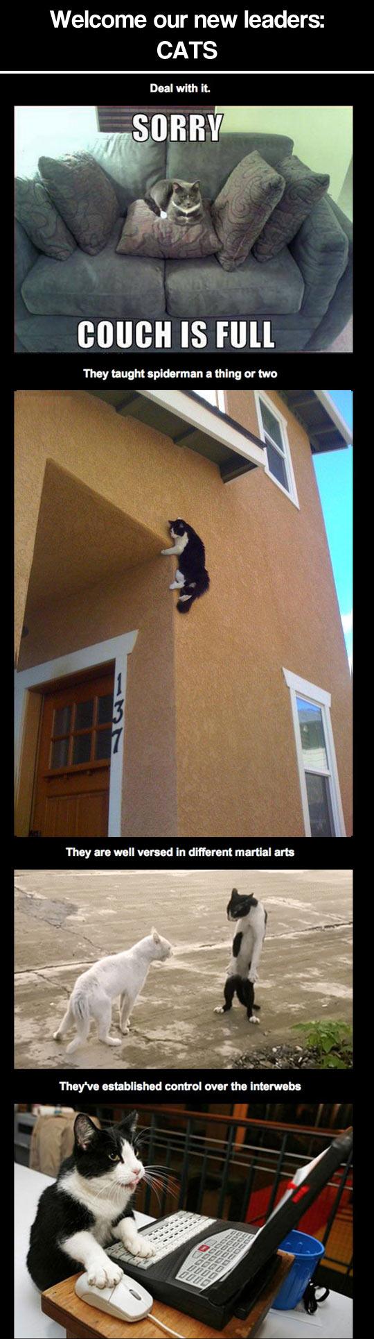 Cats doing hilarious stuff